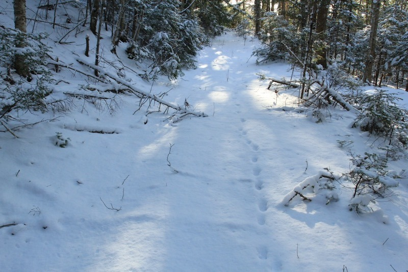 Winter Tracking Series
